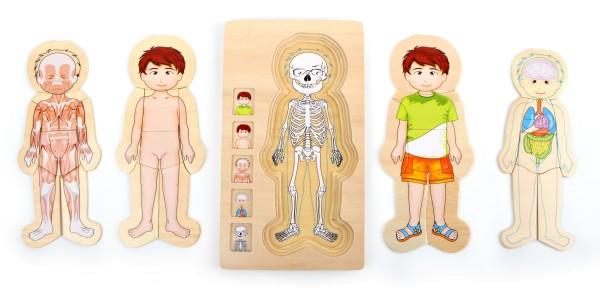 Legler, Schichtenpuzzle, Anatomie, Junge, 28, Teile, 4020972058423, 5842